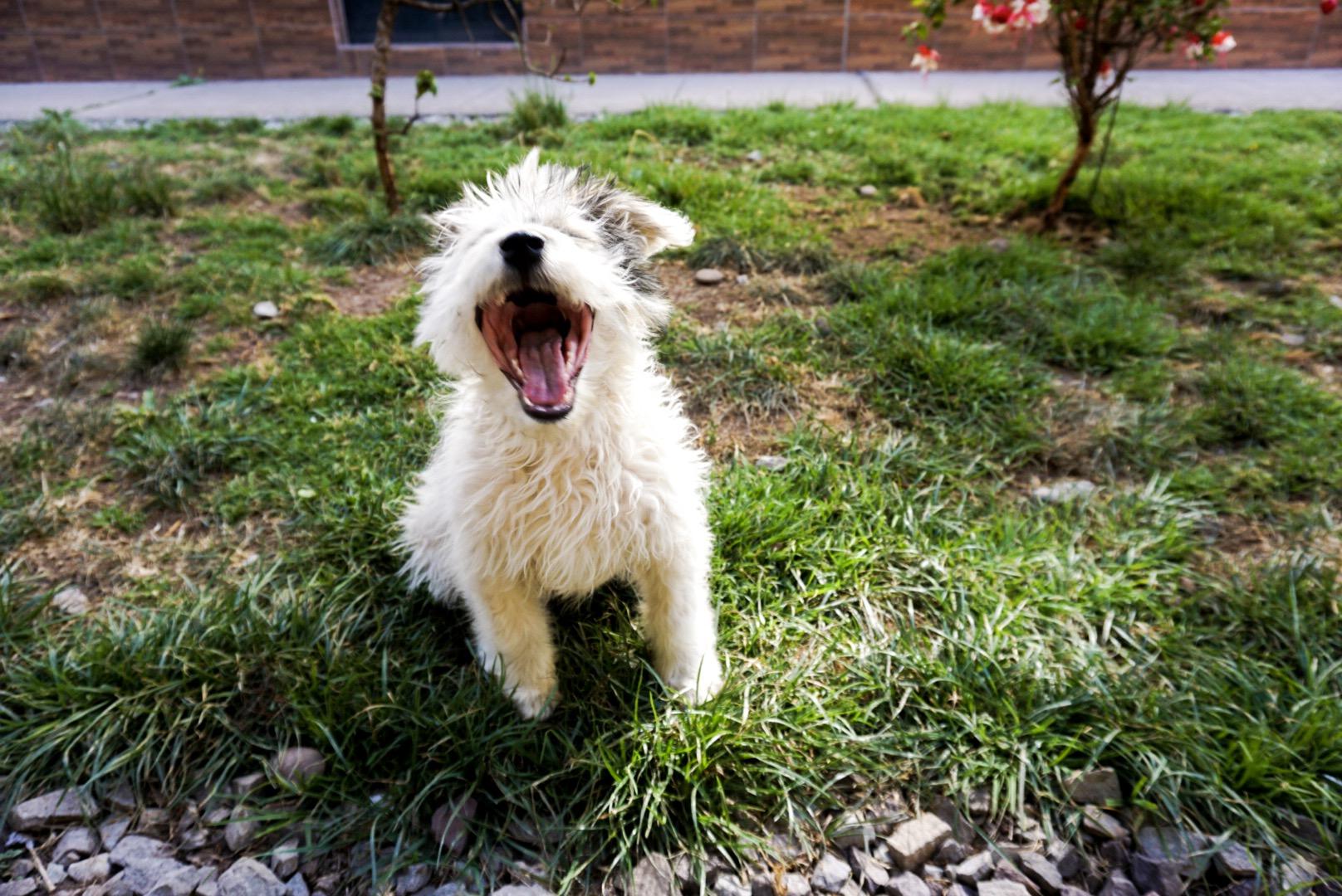 Cucciolo di cane a Cusco