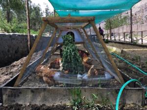 Galline e permacultura